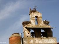 ooievaars-op-toren